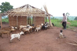 Agricultural Projects (4)