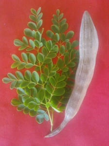 Moringa leaves and seed pod
