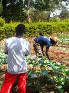 Land preparation and planting